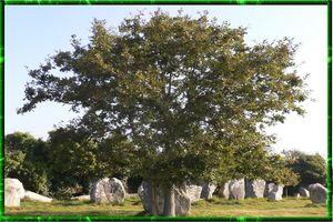 menhirs breton,arbre genealogique gratuit � imprimer