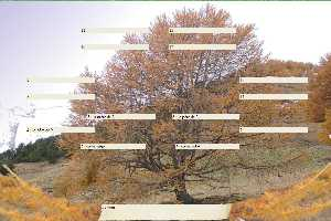 meleze-or,arbre genealogique gratuit � imprimer