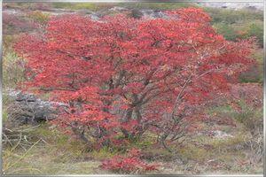 automne, arbre genealogique gratuit � imprimer