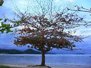 arbre sur le plage, arbre genealogique gratuit � imprimer