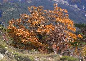 automne,arbre genealogique gratuit � imprimer