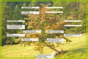 sorbier,arbre genealogique gratuit � imprimer